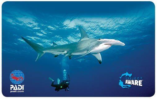 AWARE Shark Card