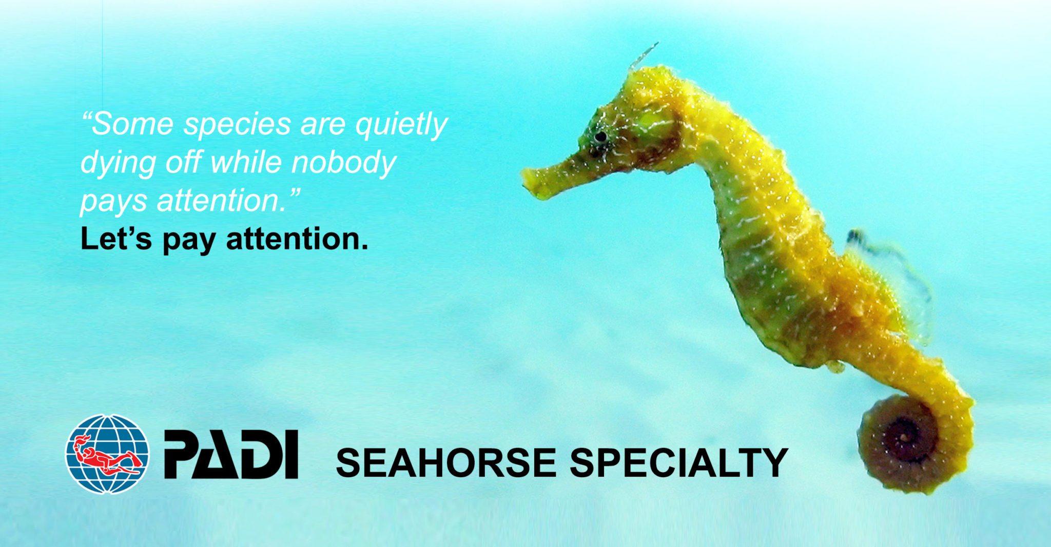 PADI Seahorse Specialty