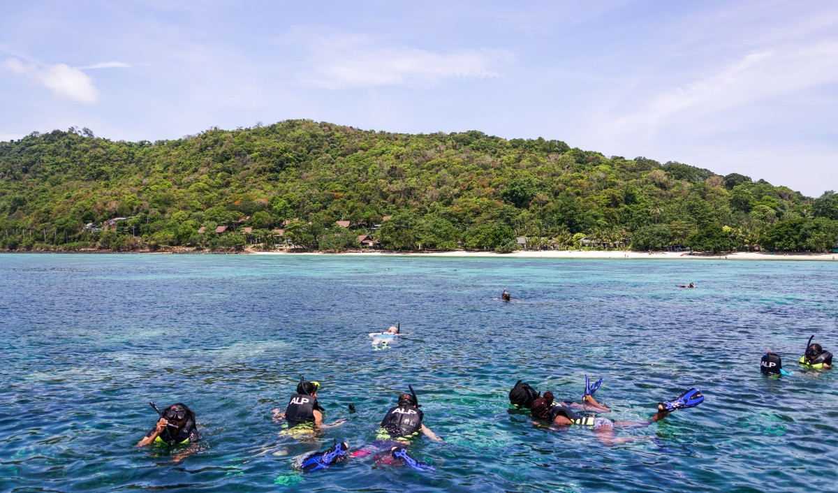 7 Sea Creatures to spot in Phuket