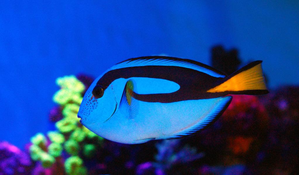 Top 5 Most Colorful Fish Species Singapore Scuba Boutique
