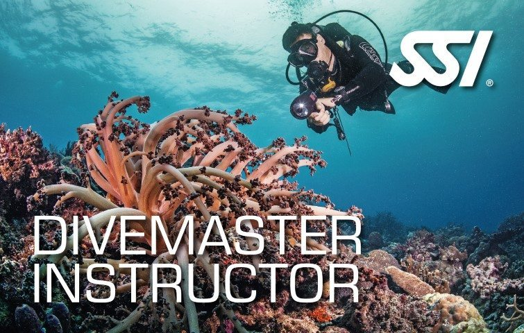 SSI Divemaster Instructor | SSI Divemaster Course | Divemaster | Professional Course | Diving Course | Amazing Dive