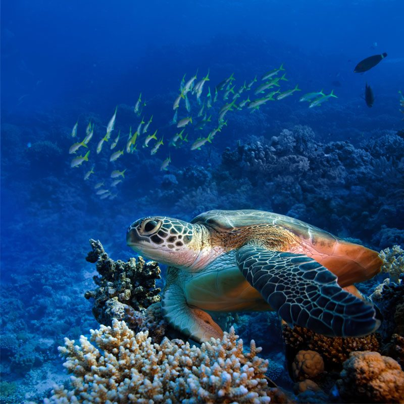 tioman | Amazing Dive