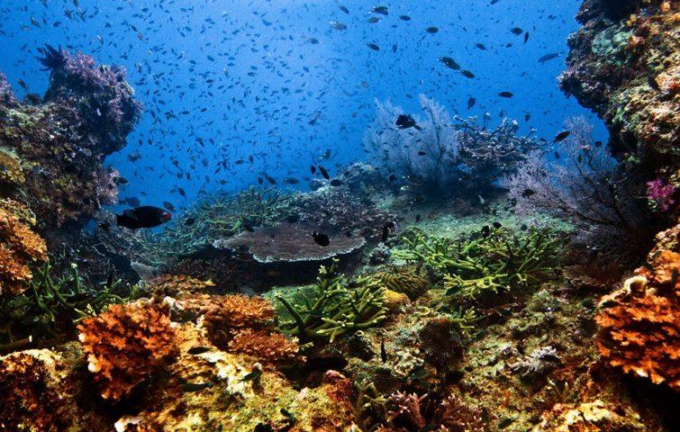 amazing tioman | Amazing Dive