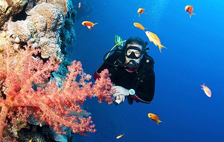 Scuba Diver | Amazing Dive