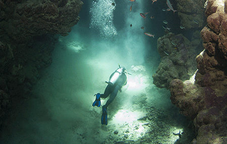 Specialty Diver   Amazing Dive