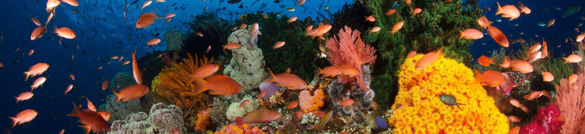Amazing rajaampat | Amazing Dive