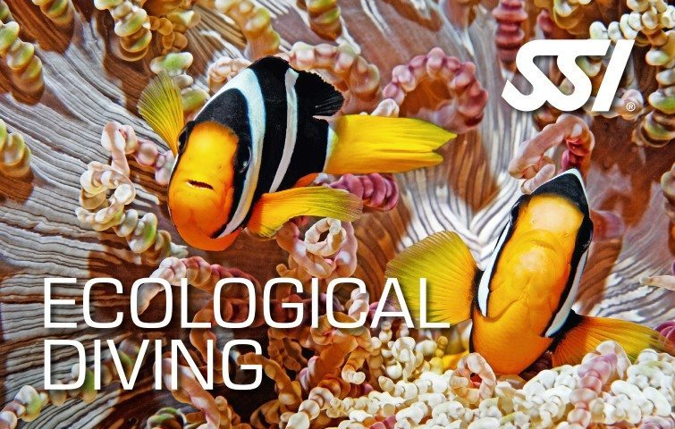 SSIEcological Diving | SSI Ecological Diving Course | Ecological Diving | Diving Course | Amazing Dive