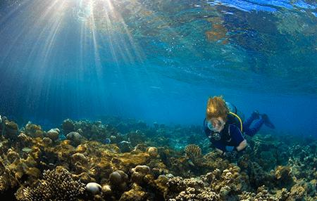 River Diving   Amazing Dive