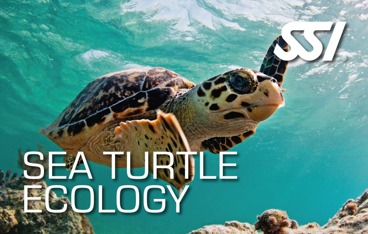 SSI Sea Turtle Ecology | SSI Sea Turtle Ecology Course | Sea Turtle Ecology | Specialty Course | Diving Course | Amazing Dive