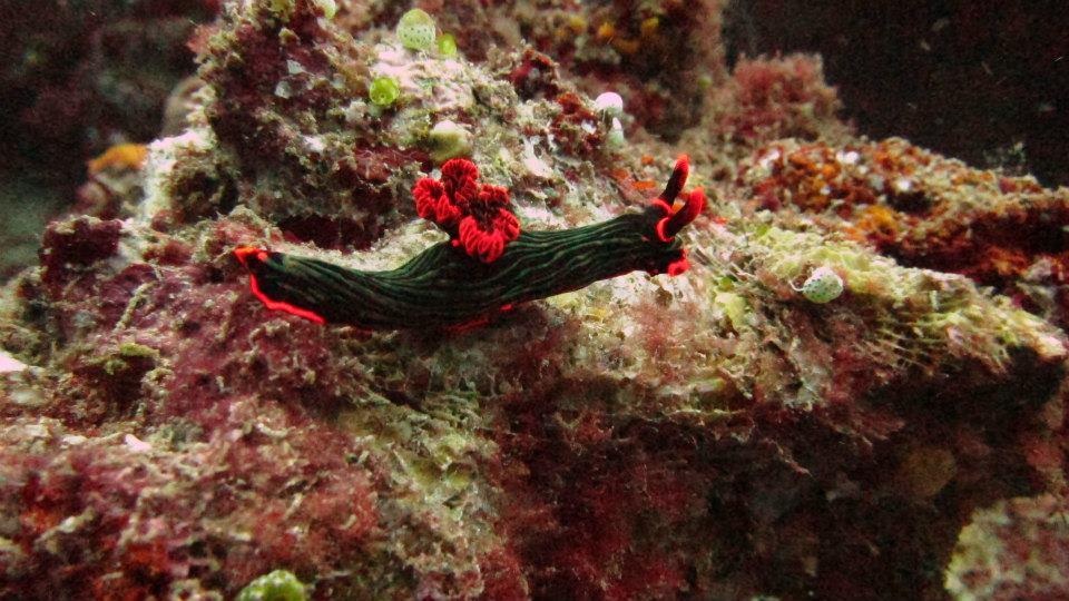 dive manado | Amazing Dive