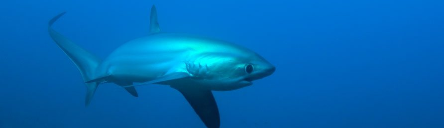 evolution divers malapascua philippines   Amazing Dive