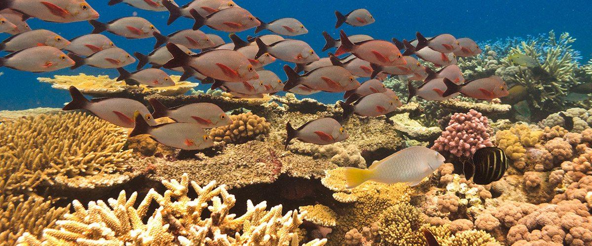 marineanimal bintan | Amazing Dive