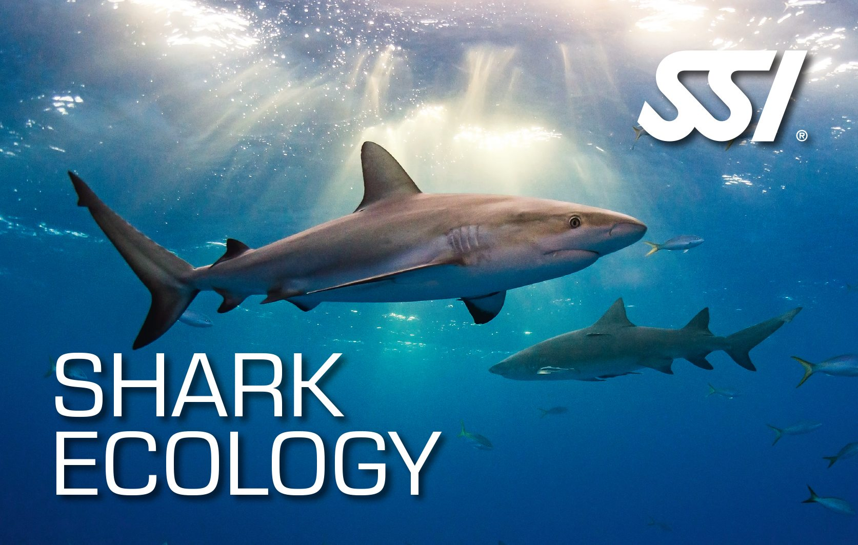 SSI Shark Ecology | SSI Shark Ecology Course | Shark Ecology | Specialty Course | Diving Course | Amazing Dive