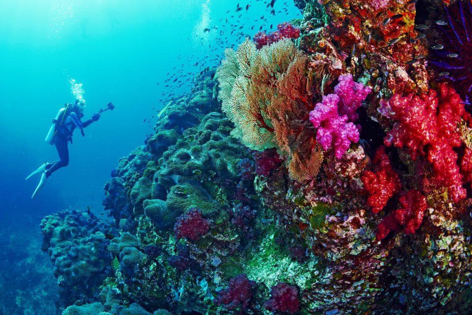 thai | Amazing Dive