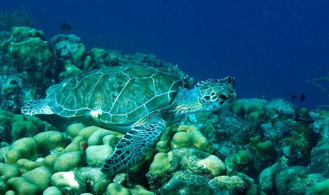 Amazing Singapore | Amazing Dive