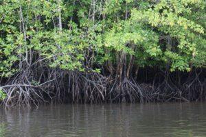 4 Reason Why Dive Riau
