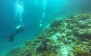 amazing-dive-maldives-clown-trigger