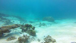 amazing-dive-maldives-reef