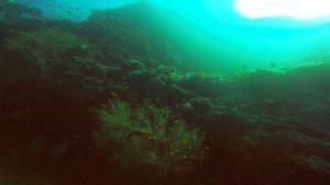 amazing-dive-maldives-reef-wall