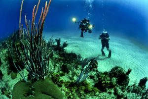 7 Rules of Scuba Diving