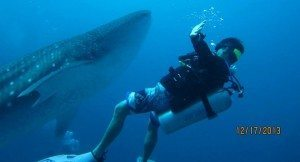 Whaleshark Spotted!!!