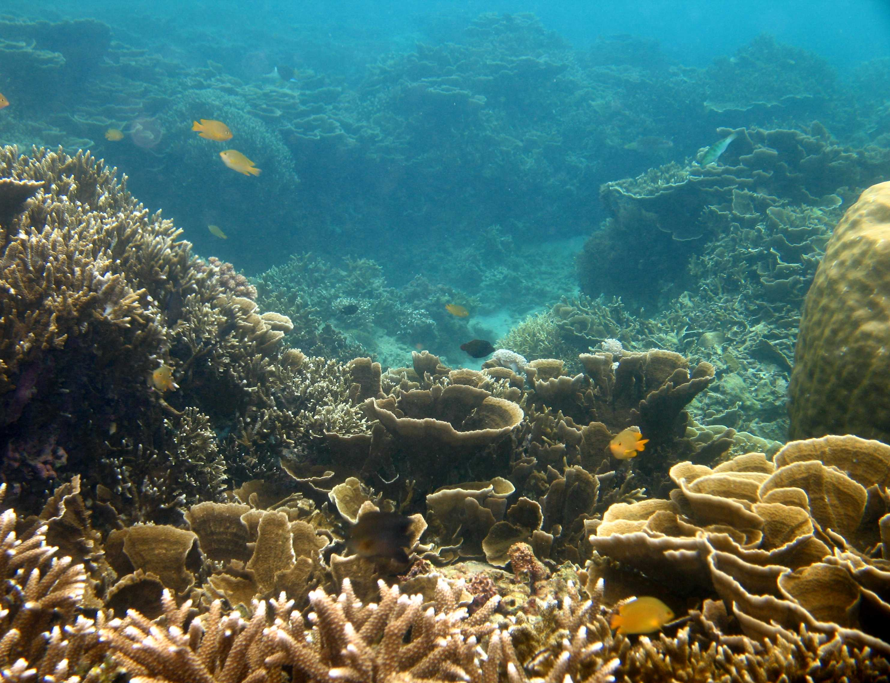 3 Factors Killing Our Coral Reef Ecosystems