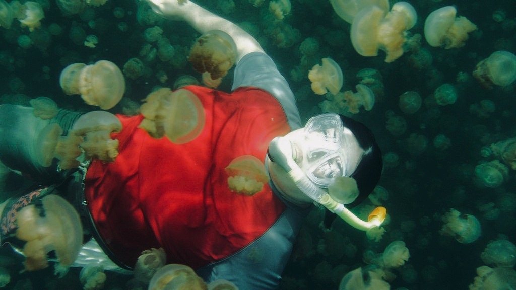 A sea blanketed with jellyfish may sting your heart with fear or you can just choose to be mesmerized by their intricate beauty. I know it's hard to stay calm when a slimy jellyfish touches your leg, nonetheless, here is a list of four (4) destinations to give you a chance to swim with them anyway: