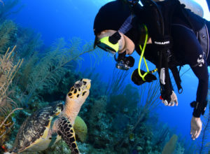 Here's Why You Should Dive in Anilao