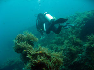 Top Destinations for Wreck Diving