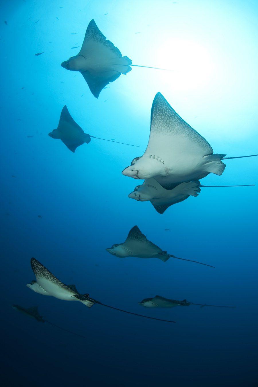 东南亚潜水行程