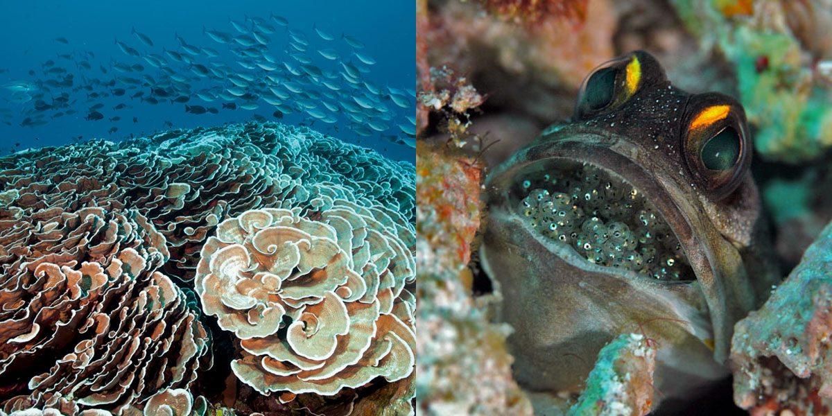 四王岛后颌鱼