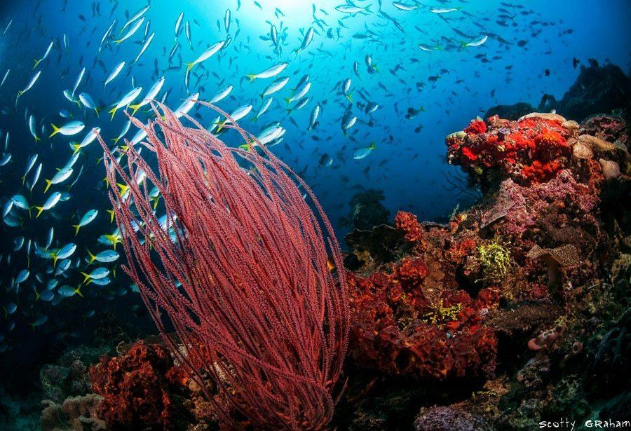 四王岛潜水珊瑚