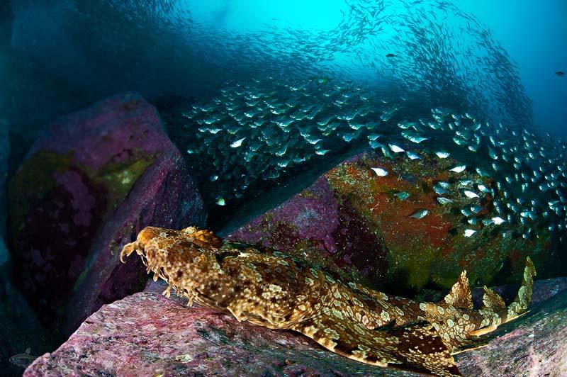 四王岛潜水鱼类