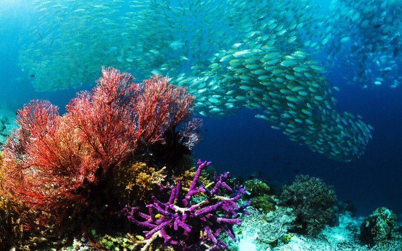四王岛潜水鱼群