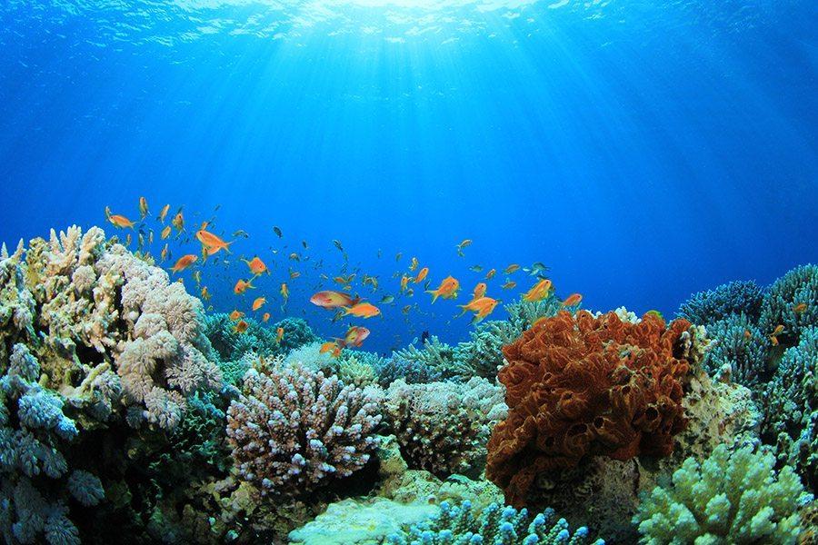 巴厘岛潜水放流