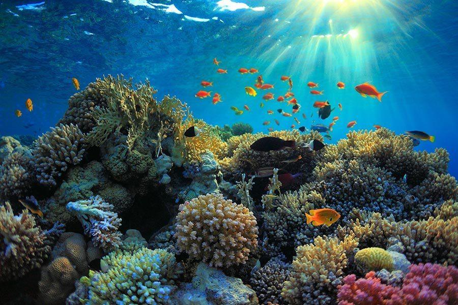 巴厘岛潜水珊瑚