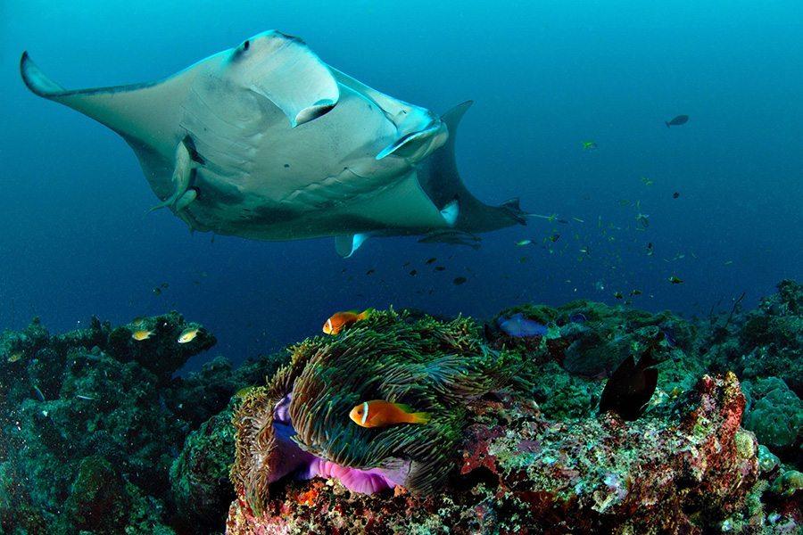 巴厘岛潜水manta