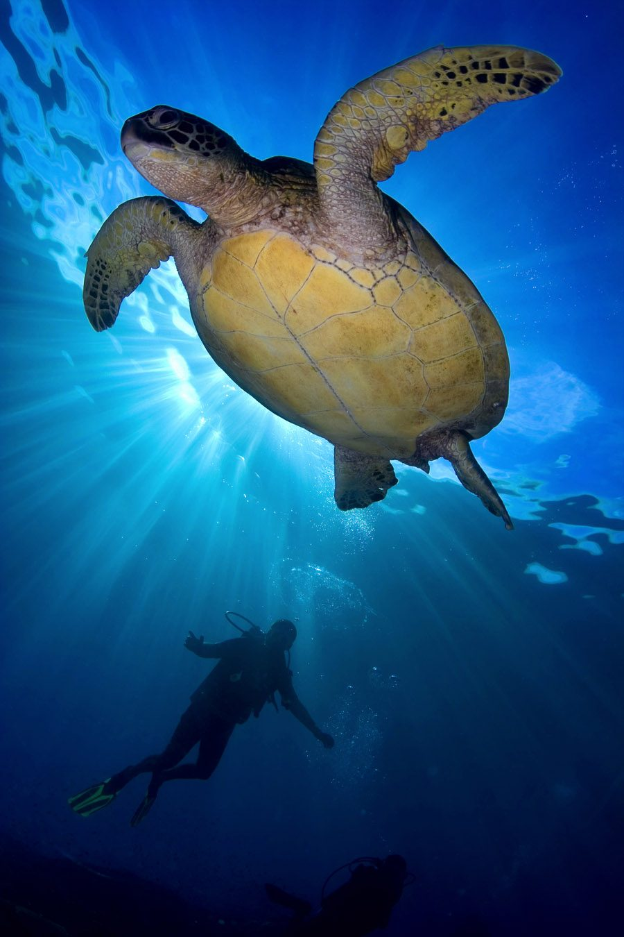 普吉岛中文潜水课程