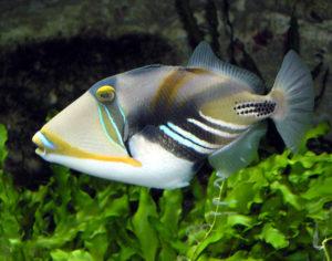 Top 5 Best Coloured Fish Species