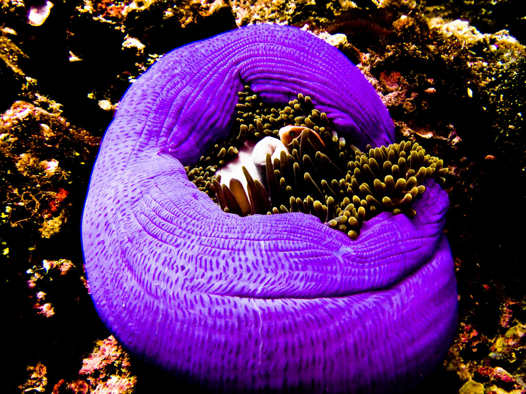 Muck Diving: Gateway to the weirdest marine critters