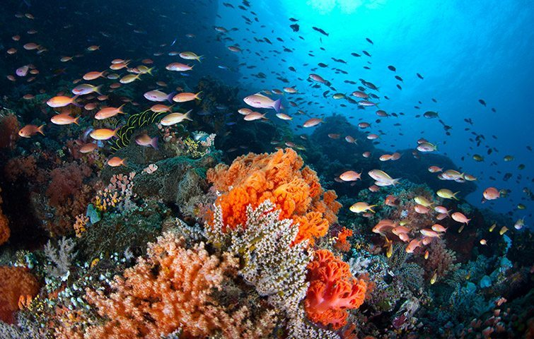 Manado | Dive Travel Indonesia