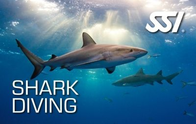 SSI Shark Diving Course | SSI Shark Diving | Shark Diving | Diving Course