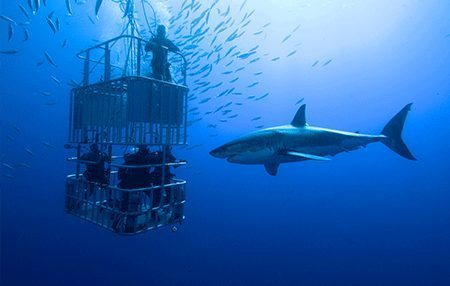 Shark Diving | Diving Courses