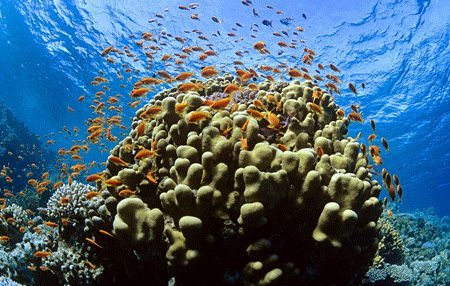 Tubbataha Reef | Dive Travel Philippines