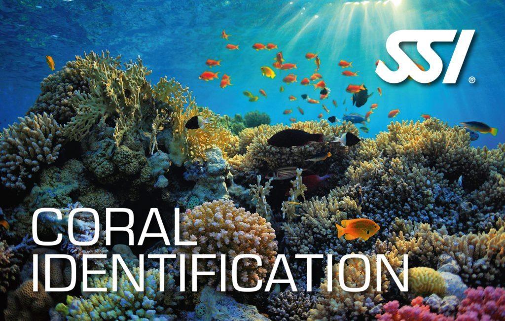 SSI Coral Identification | SSI Coral Identification Course | Coral Identification | Specialty Course | Diving Course