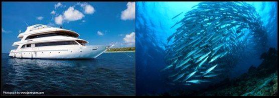 Maldives & Sipadan