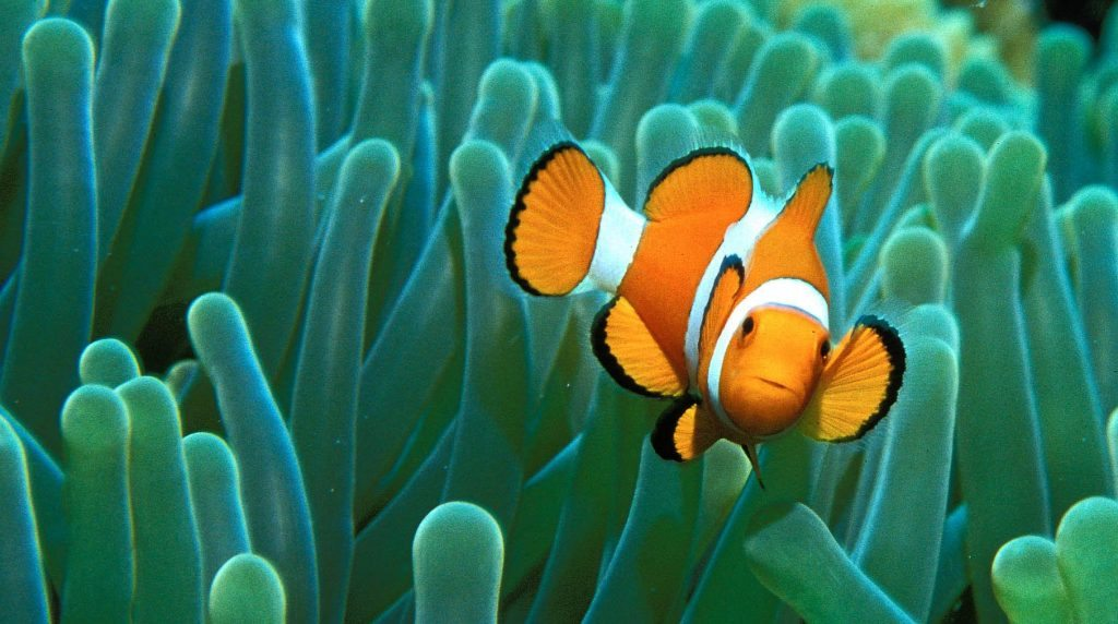 bintan-is-home-for-a-variety-of-marine-life-2