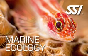 SSI Marine Ecology Specialty Course