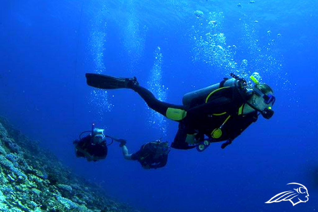 Why I Took My Advanced Adventurer Diving Course in Bali