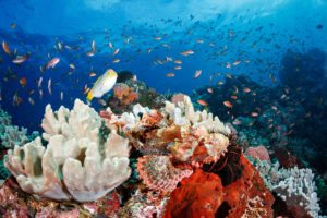 3 Reasons Why Anilao is Every Underwater Photographer's Destination